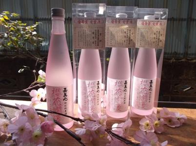 桜花爛漫 リサイズ.jpg
